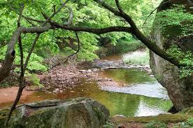 nature scenes4